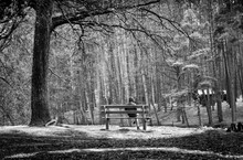 The Man Sitting On The Bench. Beautiful Forest. Spring Green Trees. Day Shadows. Amazing Nature.