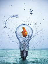 Bulb Led Lamp With Fish Inside...