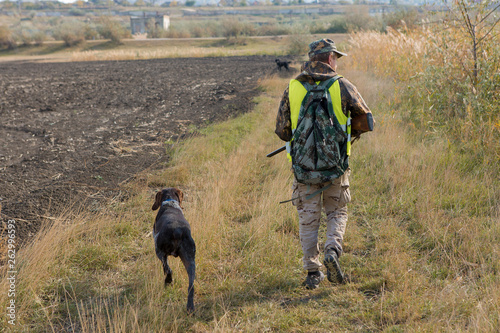 Poster Chasse Hunter with a german drathaar and spaniel, pigeon hunting with dogs in reflective vests