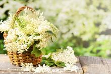 White Flowers From Elderberry In Basket, Copy Space