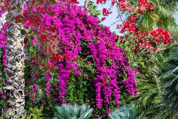 piękny ogród z egzotycznymi kwiatami