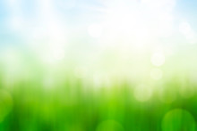 Green Grass And Blue Sky Abstract Background With Bokeh