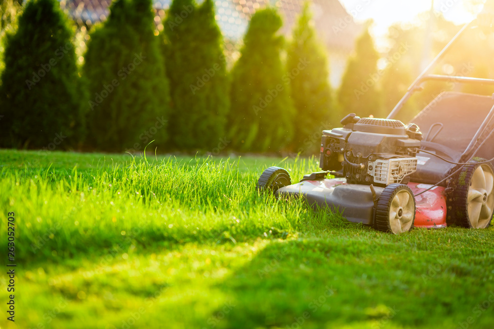 Fototapety, obrazy: Lawn mower cutting green grass in sunlight