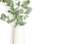 Dry Eucalyptus Branches In Vase On White Background. Copy Space. - Image