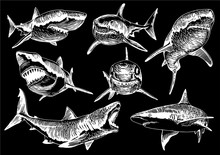 Graphical Set Of Sharks Isolated On Black Background,vector Illustration For Tattoo,coloring And Printing