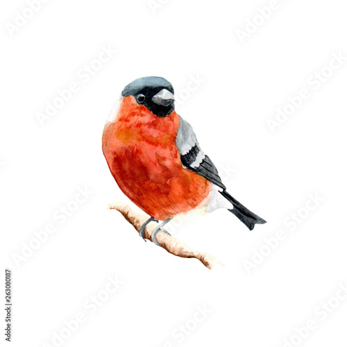 Foto The figure of a bullfinch on a branch.