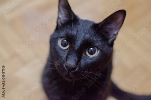 Black cat Wallpaper Mural