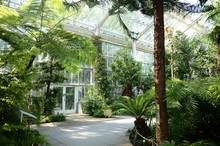 Jardin Botanique De Meise (Bra...