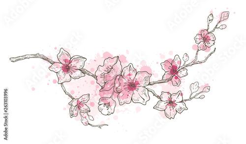 Stampa su Tela Spring sakura flowers blossom art, hand drawn watercolor style