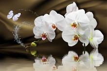 3d Wallpaper, Orchids Reflecte...