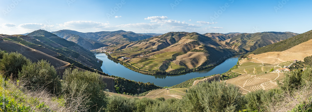 Fototapety, obrazy: View of the terraced vineyards in the Douro Valley
