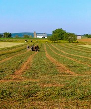 Amish Man And A Team Of Four Horses Plow An Alfalfa Field