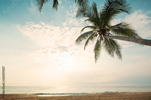 Foto auf AluDibond Palms Vintage nature background - Landscape of coconut palm tree on tropical beach in summer. Summer background concept. retro instagram filter effect