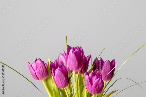 Wall Murals Tulip Pink tulips flower bouquet isolated on a solid grey background