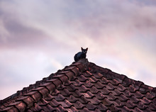 Silhouette Of Black Cat On The Roof In Twilight On Background Of Cloudy Sky