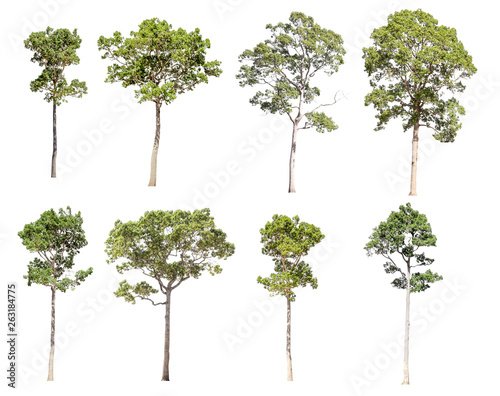 Fotografia, Obraz  Collection of isolated trees on a white background