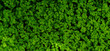 Green leaves texture. Fresh spring tropical leaves background