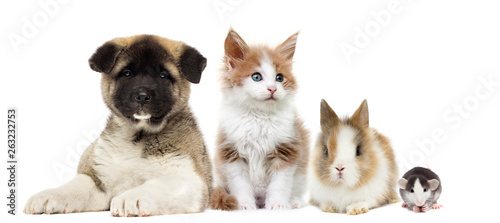 kitten and rabbit and puppy...