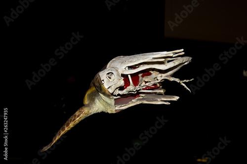 Photo escultura del esqueleto de una tortuga marina