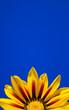 canvas print picture - Flor y cielo