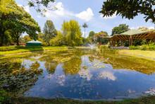 Bogota Pond And Tropical Plant...