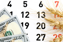 Wheat Ears On The Calendar Wit...