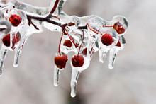 Freezing Rain, Thick Layer Of Glaze Ice On Trees Branches In Montreal, Canada, 10 April 2019