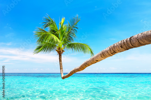 Fototapety, obrazy: Coconut palm tree against blue sky and beautiful beach in Punta Cana, Dominican Republic. Vacation holidays background wallpaper. View of nice tropical beach.
