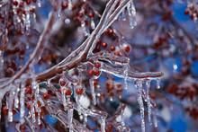 Trees Under Heavy Freezing Rai...