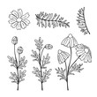 Chamomile. Set of outline flowers. Hand drawn vector illustration.
