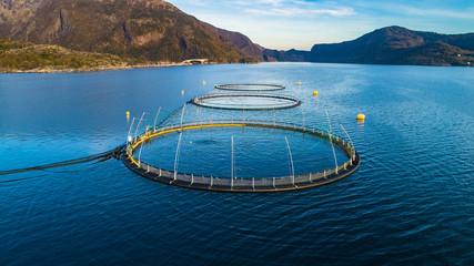 Panel SzklanySalmon fish farm. Hordaland, Norway.