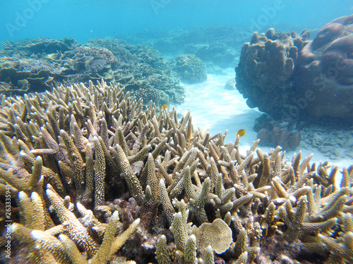 Bleaching Coral Reef of the Perhentian Islands, Malaysia, 2018.