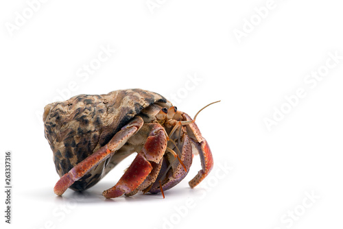 Photo The hermit crab isolated on white background