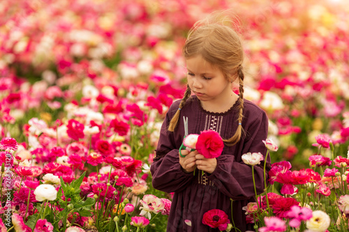 Aluminium Prints Flower shop israeli girl picking the blossoming flowers of garden buttercups in the magnificent garden
