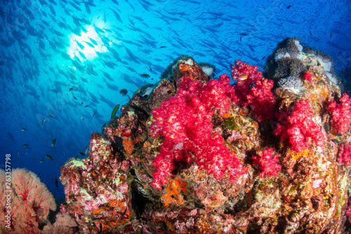 Fototapety, obrazy: A beautiful, colorful tropical coral reef system in asia