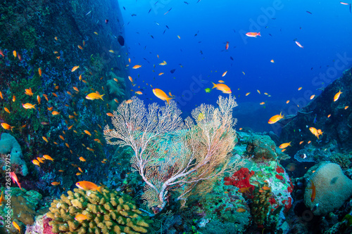 Fototapety, obrazy: Tropical fish swimming around a beautiful tropical coral reef