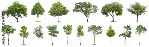 Poster Trees The collection of trees isolated on white background. Beautiful and robust trees are growing in the forest, garden or park.