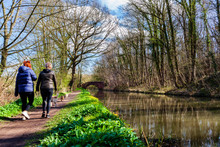 Walking Dogs  On Chesterfield Canal