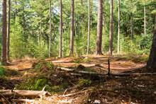 Forest  Chaamse Bossen, The Netherlands