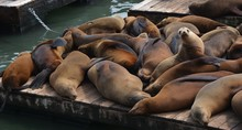 Sea Lions At Pier 39 In North ...