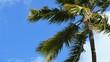 Palm tree in the wind 4k video