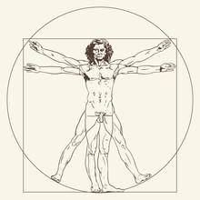 The Vitruvian Man. Le Proporzi...
