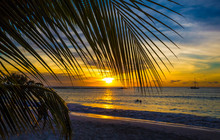 Coastal Sunset In Caribbean With Palm Leaf