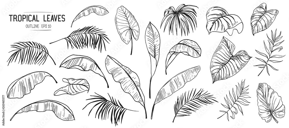Fototapeta Set of tropical leaves. Hand drawn sketches traced in vector