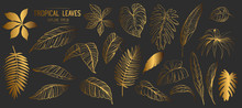 Set Of Tropical Leaves. Hand D...