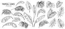 Set Of Tropical Leaves. Hand Drawn Sketches Traced In Vector