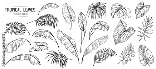 fototapeta na szkło Set of tropical leaves. Hand drawn sketches traced in vector