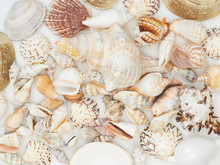 Background Made From Sea Shells