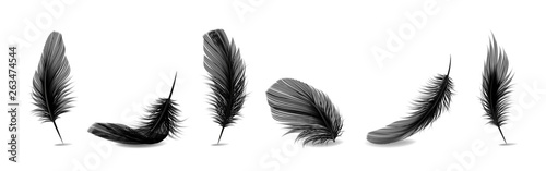 Fotomural Vector 3d Realistic Different Falling Black Fluffy Twirled Feather Set Closeup Isolated on White Background
