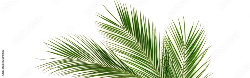 Fotografía Banner tropical green palm leaves , branches pattern frame on a white background